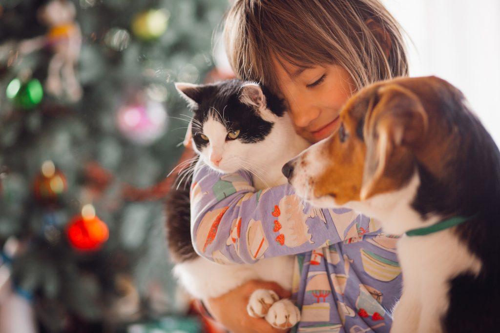 seguro para animais domésticos